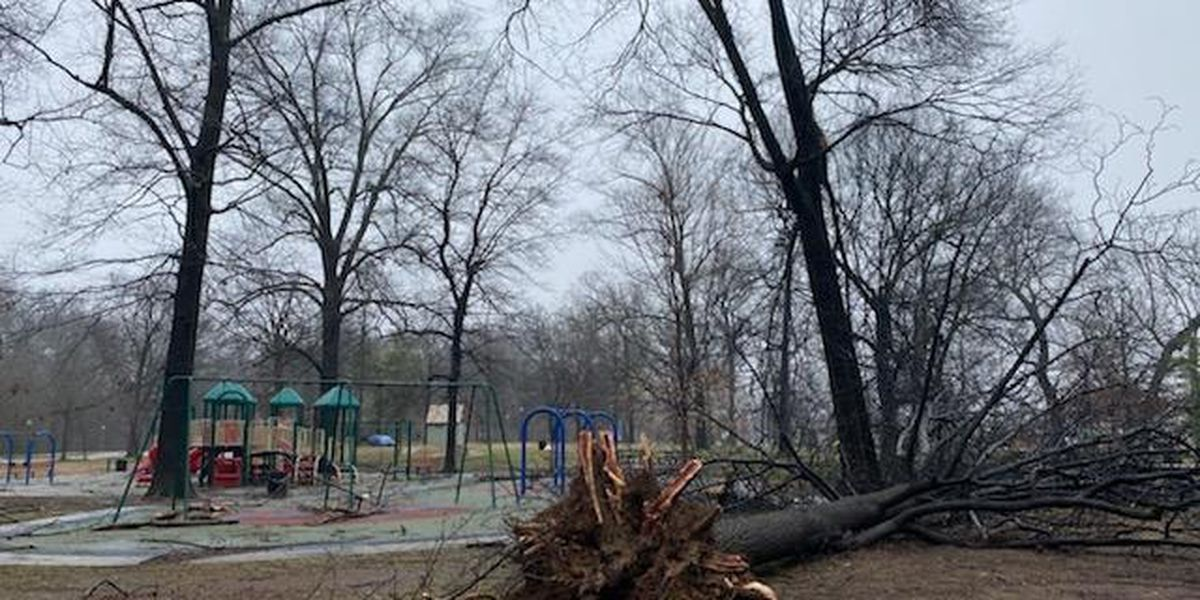Overton Park seeking donations after losing trees in weekend storm