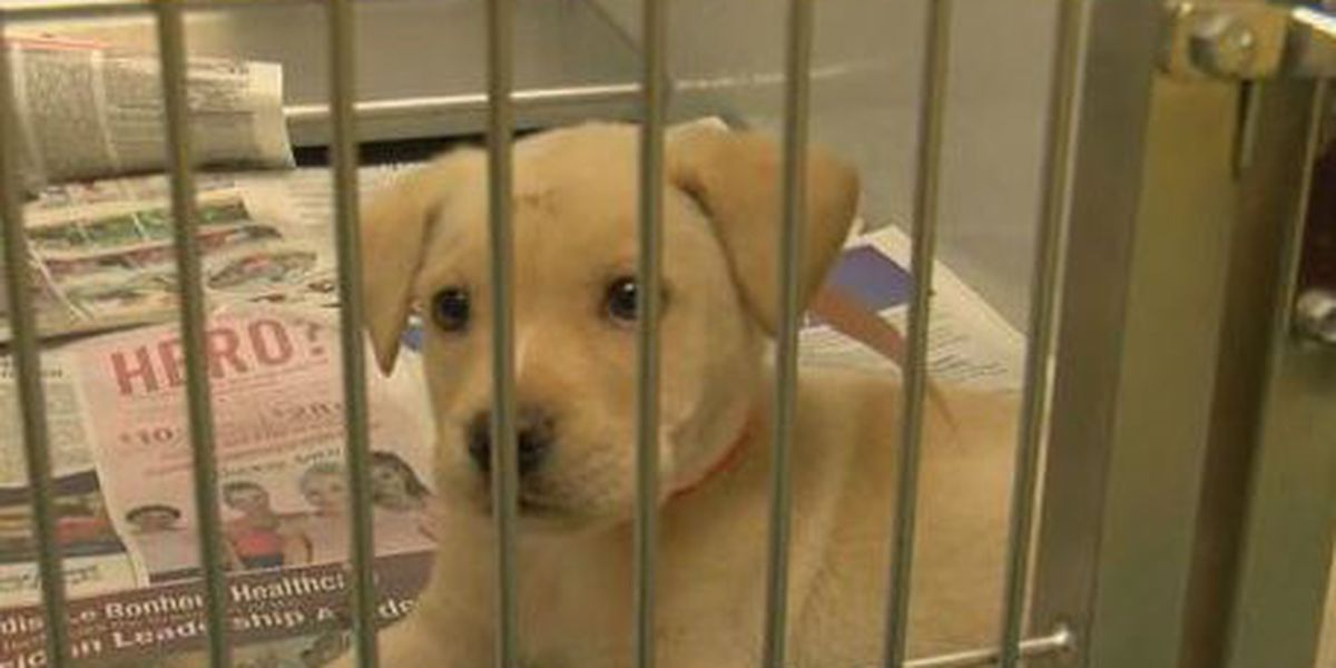 Adoption numbers at all-time high at Memphis Animal Services