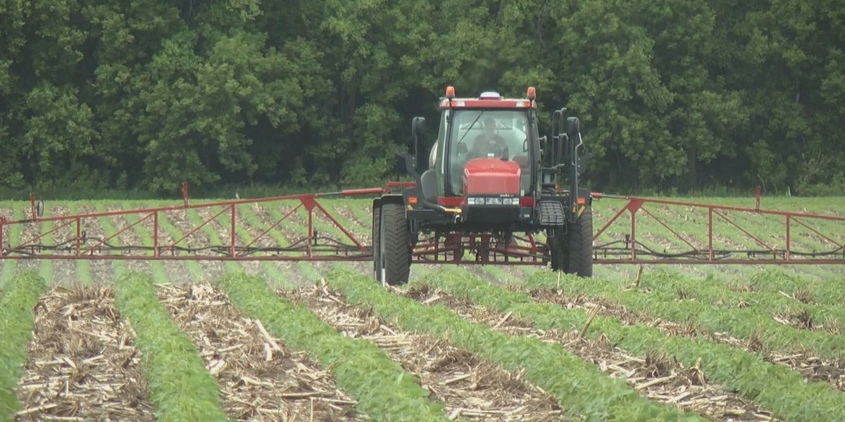 Breakdown: Why the heat index can be higher down on the farm