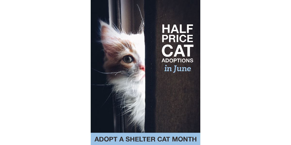 June is 'Adopt a Shelter Cat Month' and MAS is offering half-priced adoptions