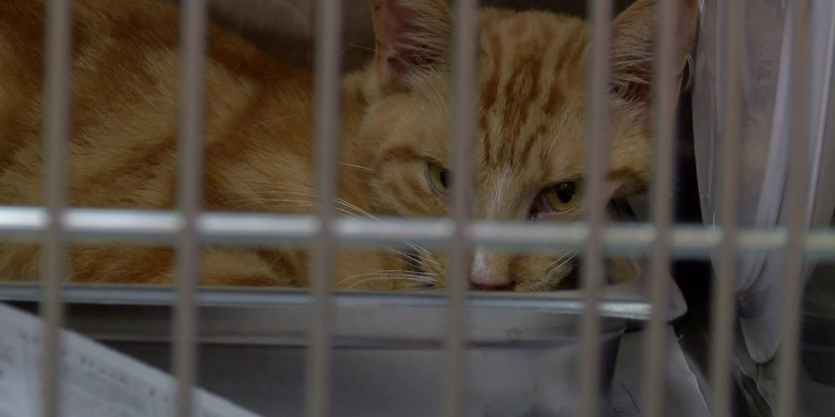 Feline leukemia found in some cats rescued from Cordova animal abuse case