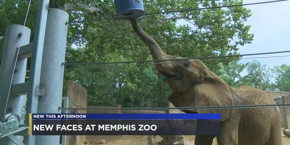 Zoo celebrates summer of new additions