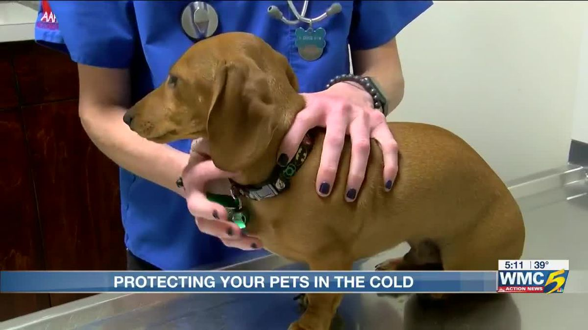Keeping your pets warm in chilly weather: It it's too cold for you, it's too cold for them