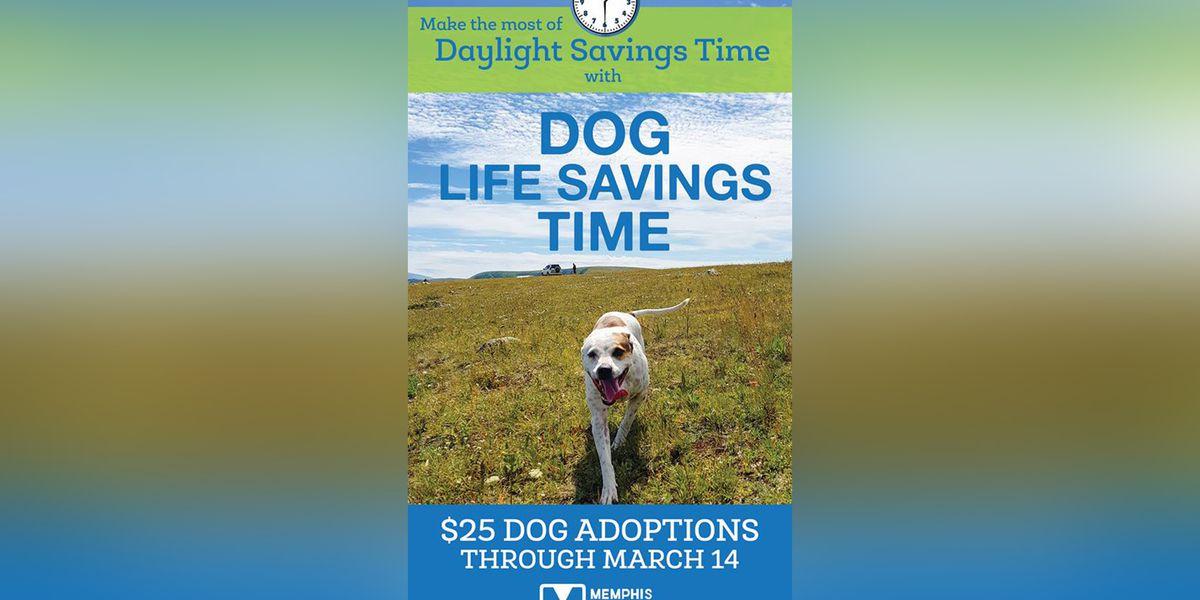 MAS reduces dog adoption fees for 'Dog Life Savings Time'