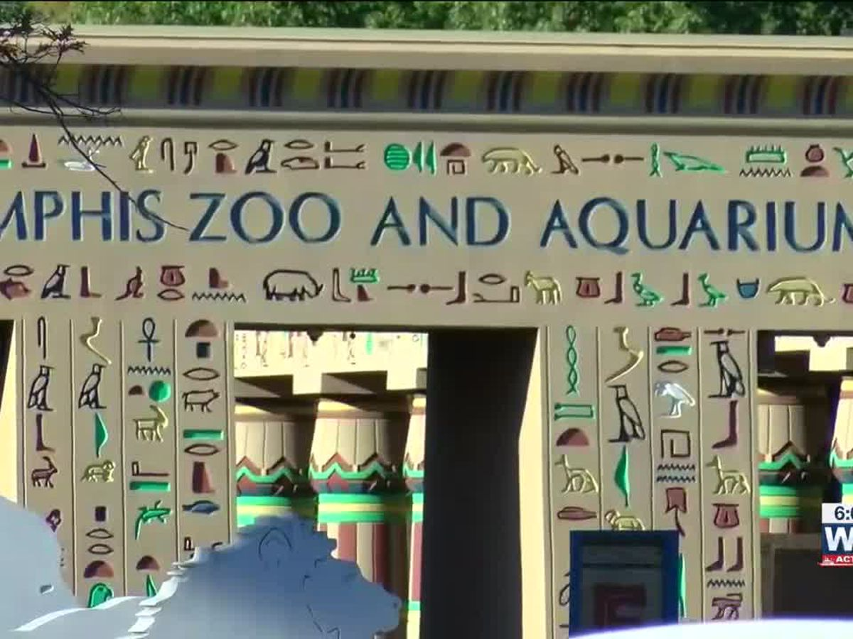 Memphis Zoo to be featured on 'World's Greatest!' TV series
