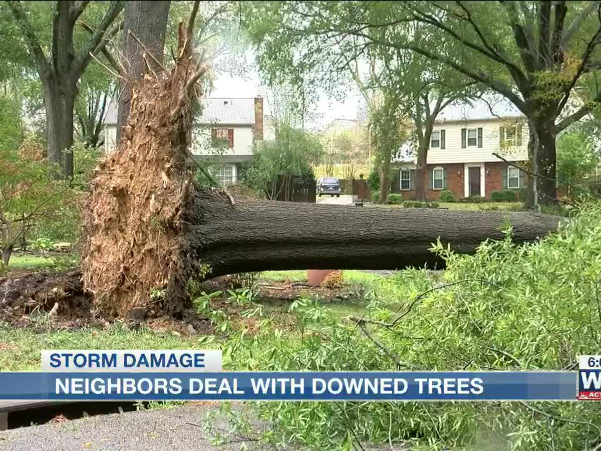 Southeast Memphis neighbors pitch in on storm clean up