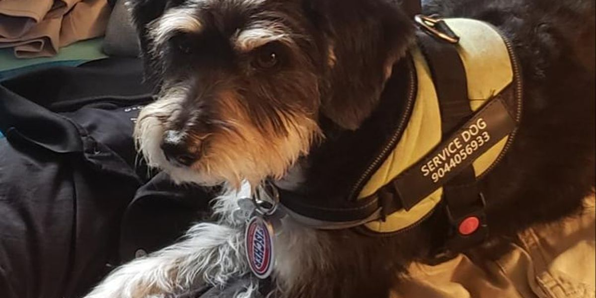 PTSD service dog stolen from vehicle in Memphis, police say