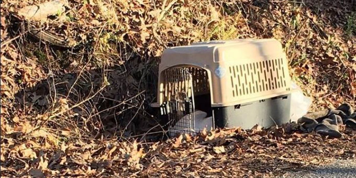 2 dogs found dead on side of road; reward offered
