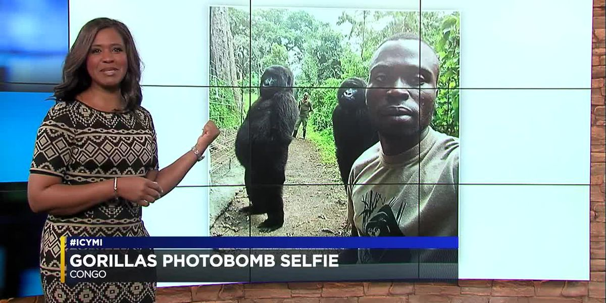 #ICYMI: 4-23-19: Gorilla selfie, weak passwords, missing pup finds home