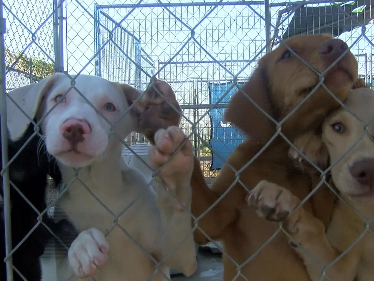 Wynne Animal Shelter at risk of closing after losing funding