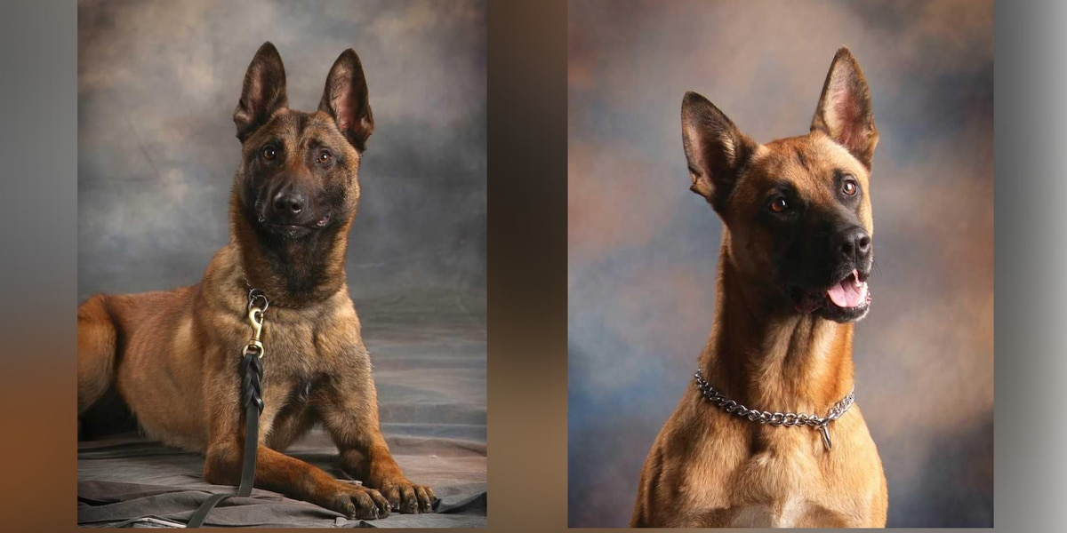 'Wessel and Rex were both outstanding': Southaven Police K9 dogs die