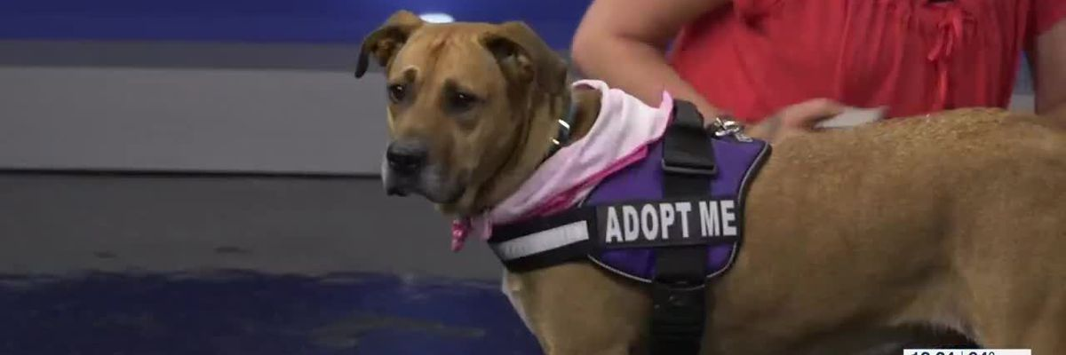 Pet of the Week: Retriever mix Beth