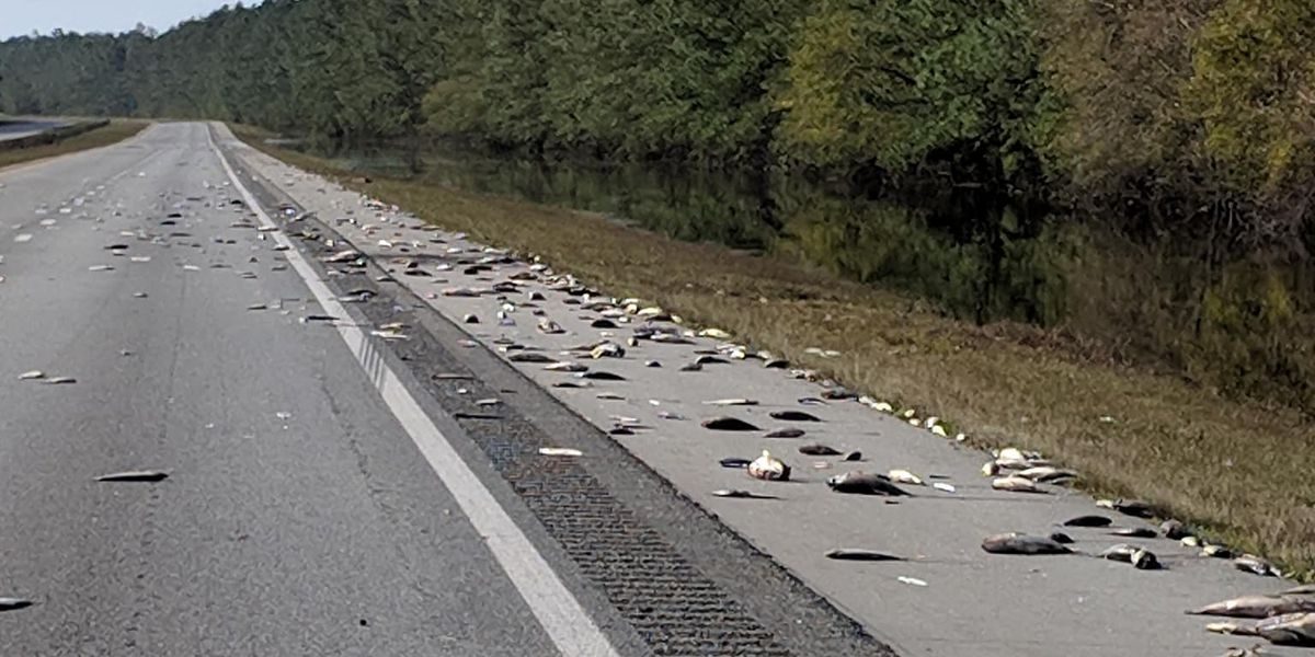 Firefighters wash dead fish off stretch of NC highway