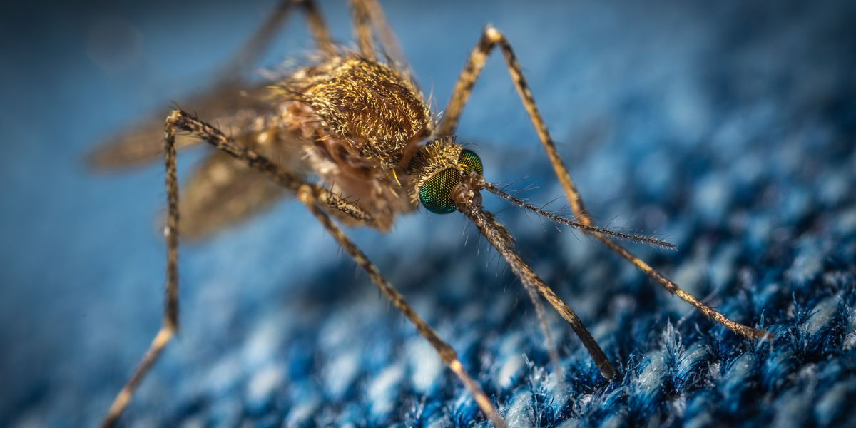 Rain, heat makes mosquitoes more populous, dangerous
