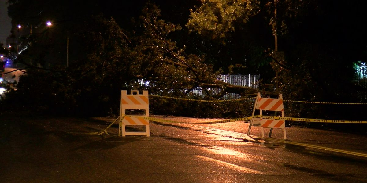 Traffic Alert: Downed tree blocks off Mendenhall Road