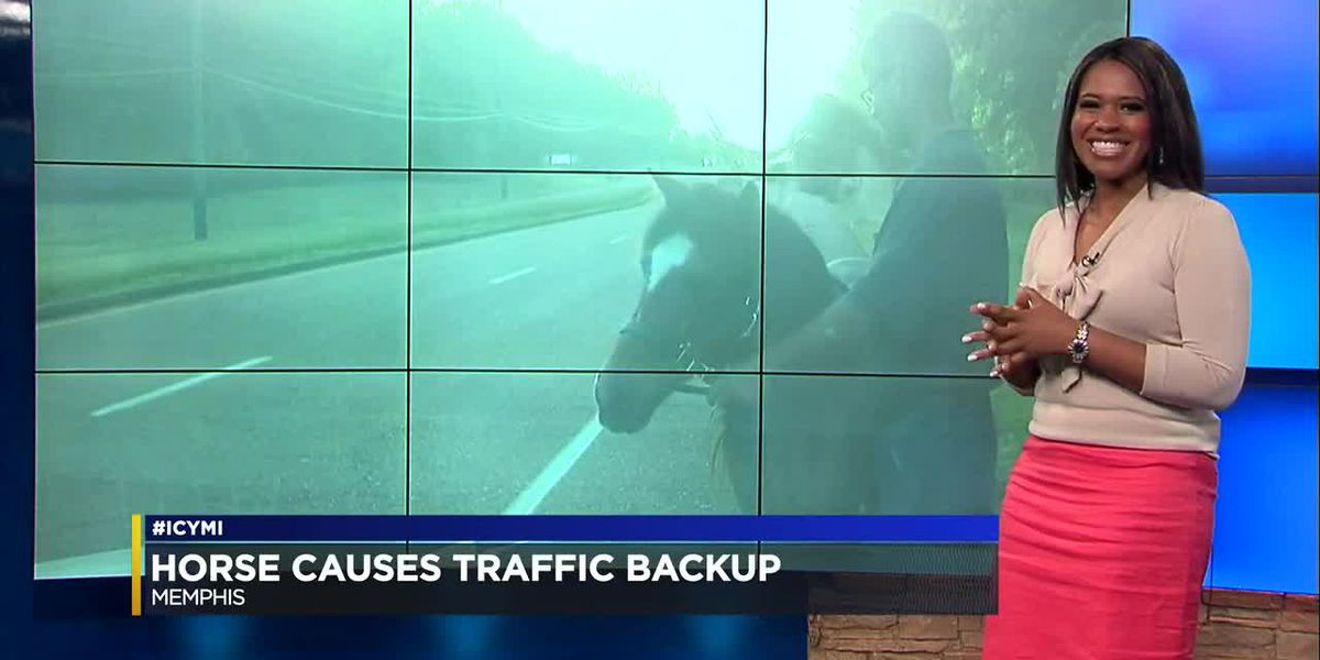 #ICYMI 5-16-19: Hershey makes a change, puzzle benefits, a horse in the road