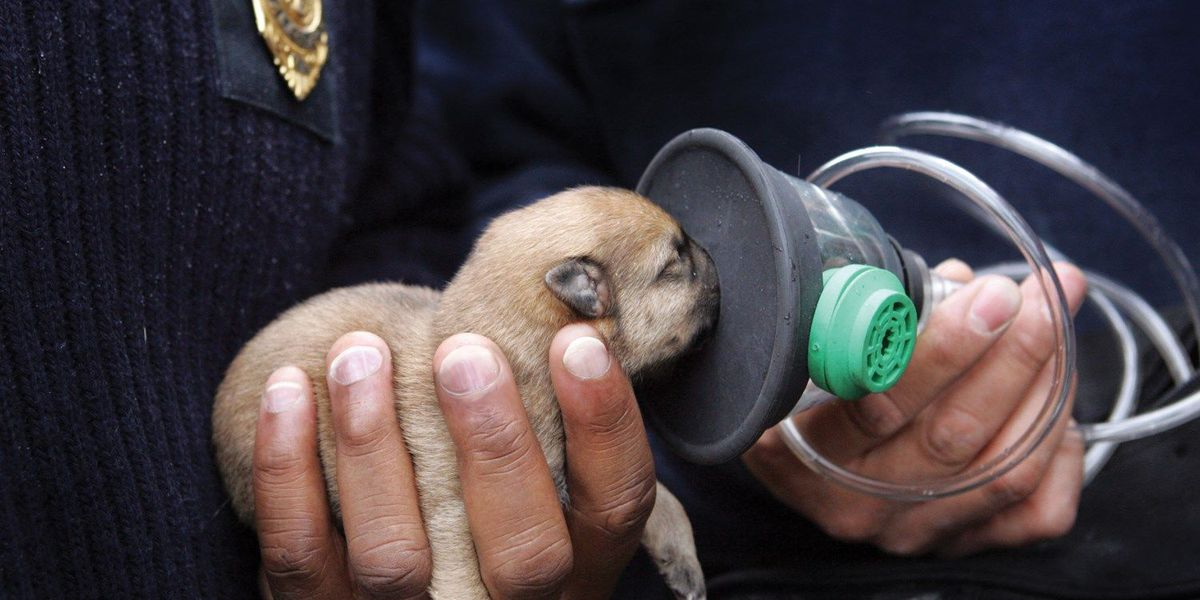 Group donates pet oxygen masks in the Mid-South