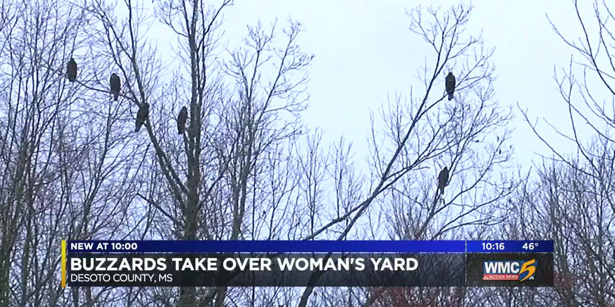 Buzzards take over woman's yard