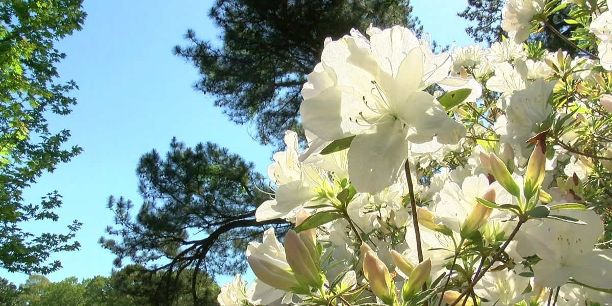 Memphis Botanic Garden raising money to improve the gardens