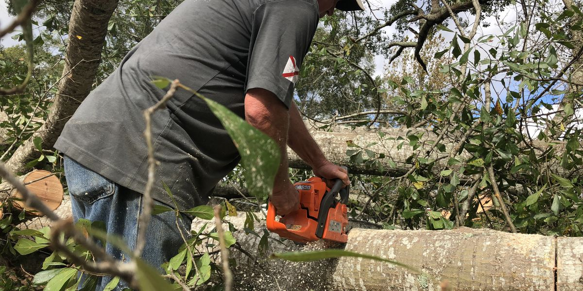 Bottom Line: Consumer Reports reveals the best chainsaws for fall cleanup