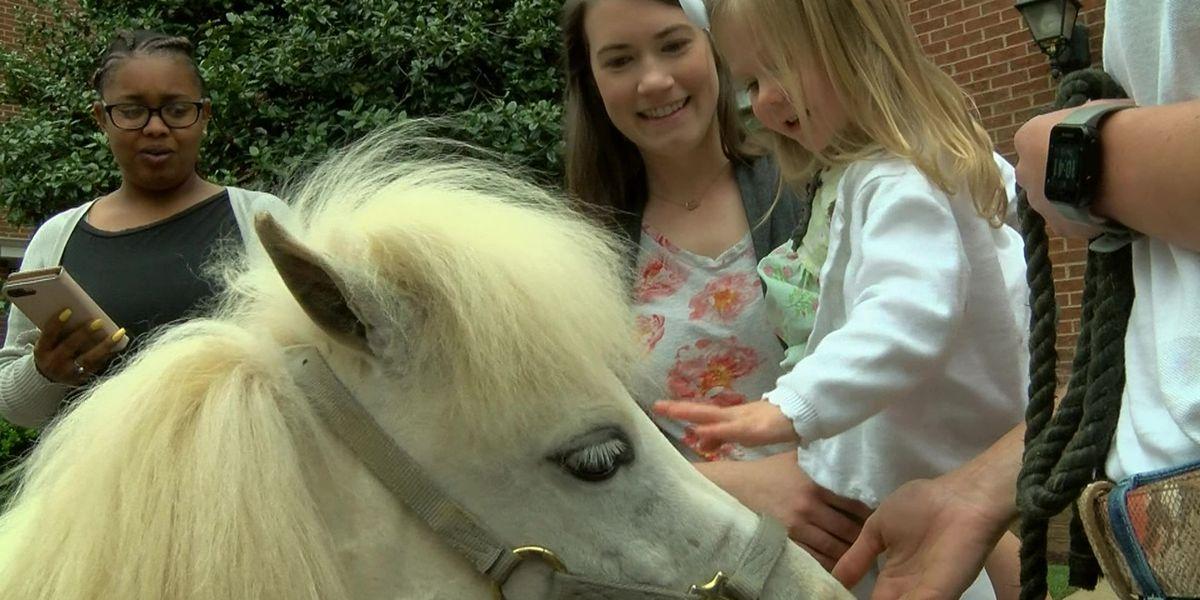 Mini therapy horses visit Memphis preschoolers