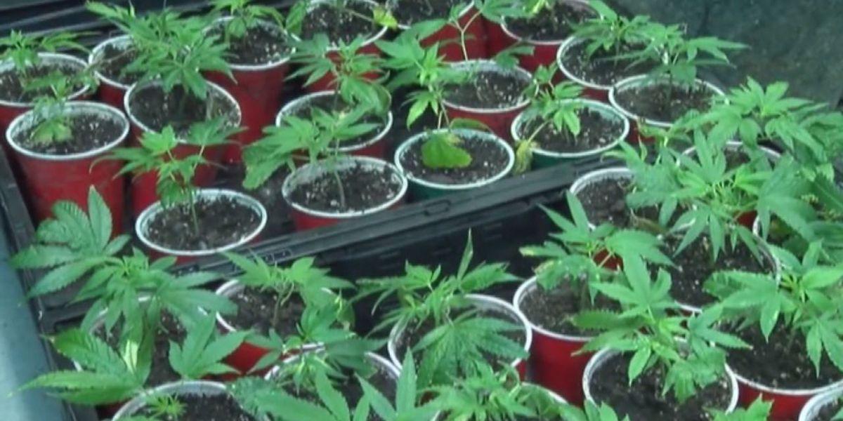 Attorney breaks down U.S. House vote on decriminalizing marijuana