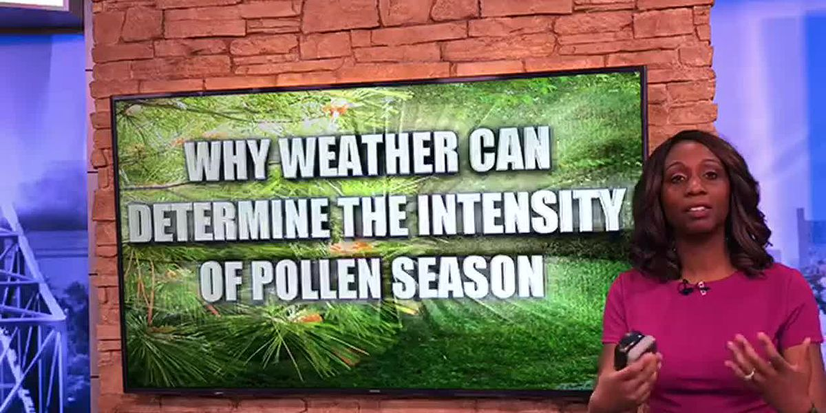 Breakdown: Why weather can determine the intensity of the pollen season