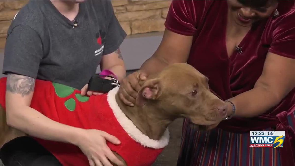 Pet of the Week: Rosebud wants a home for the holidays