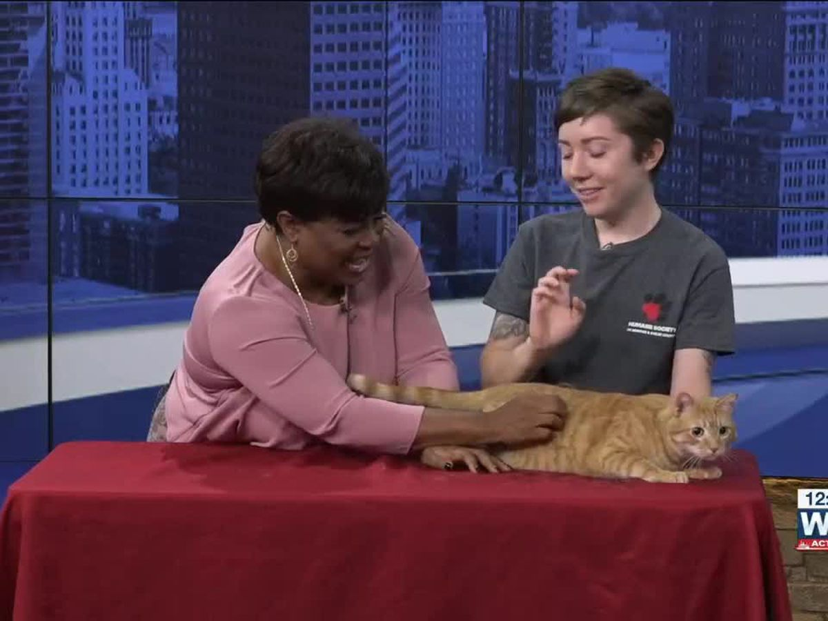 Pet of the Week: Artemis the lover