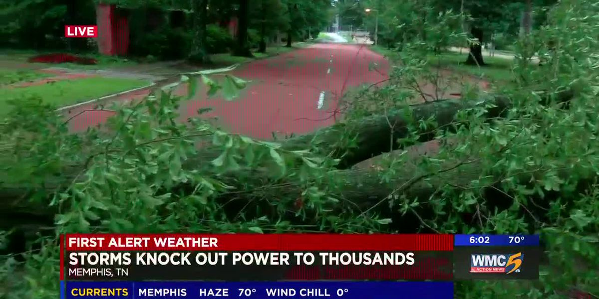 Trees down across Mid-South