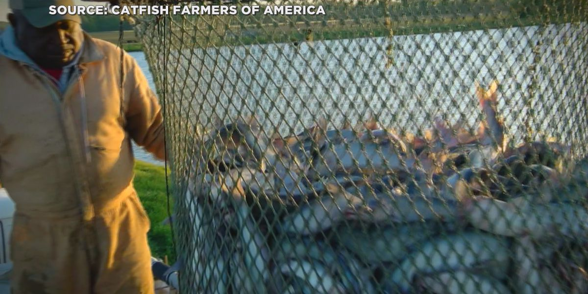 USDA approves relief fund for catfish farmers affected by pandemic