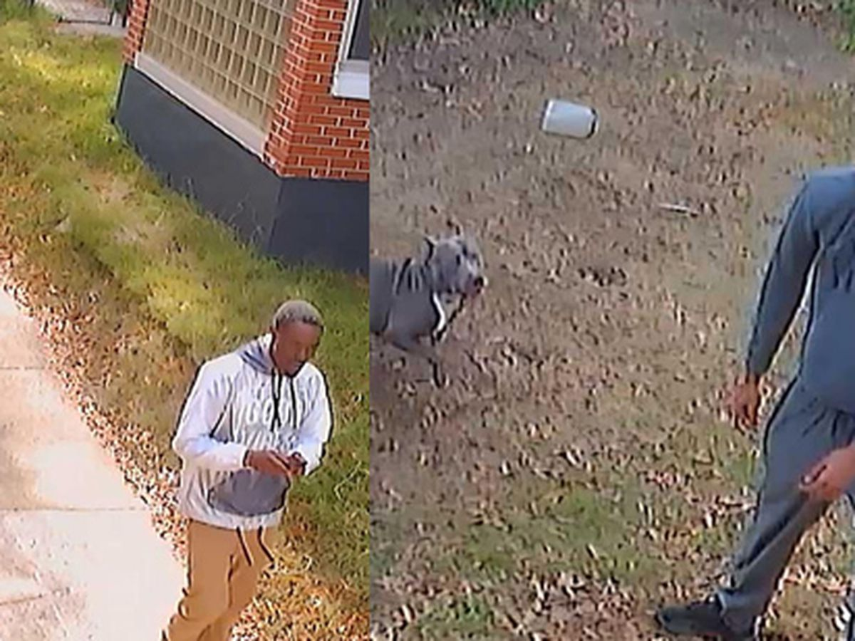 2 men steal pit bull from owner's back yard, police say