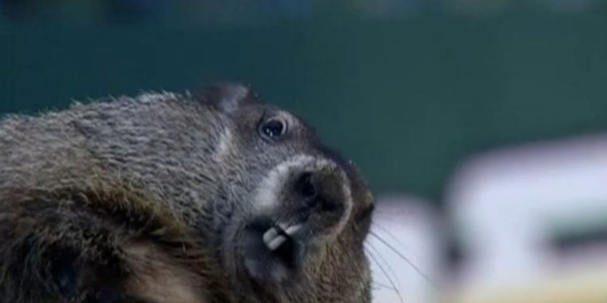 The real deal With Punxsutawney Phil